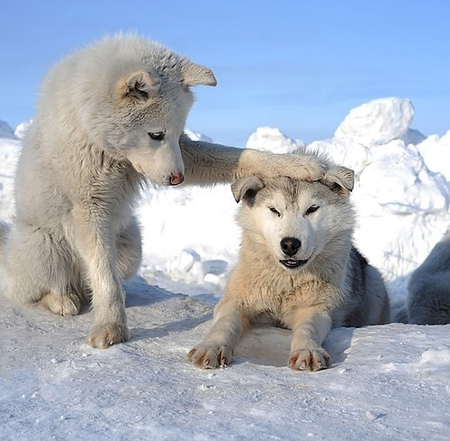 blue, cold, cool, dogs, funny, ice, puppy, snow, white, winter