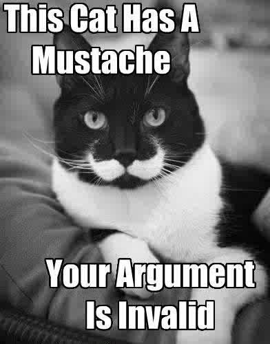cat, cats, criative, cute, kawaii, lol, moustache, random