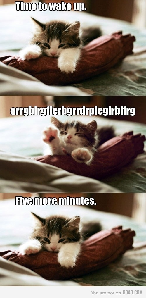 cat, cats, cute, five more minutes, kitty cat