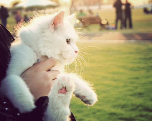 cat, cute, cute images, fotos fofas, gato, gato branco, imagens fofas, kawaii, olhar 43, we heart it, white cat