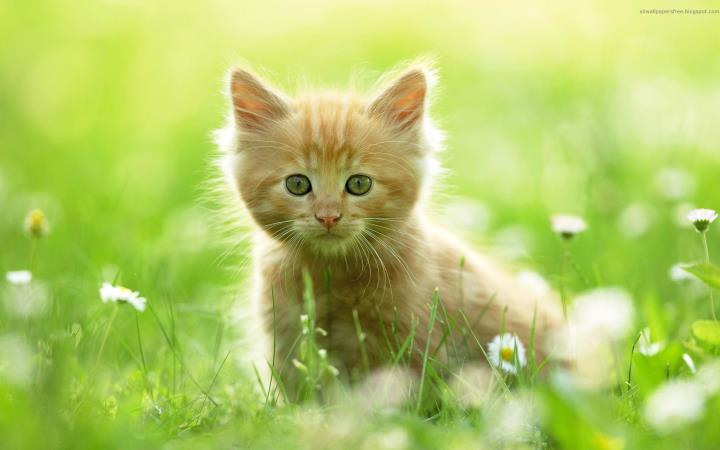 [Hình: cat-cute-kitten-sweet-Favim.com-283031.jpg]