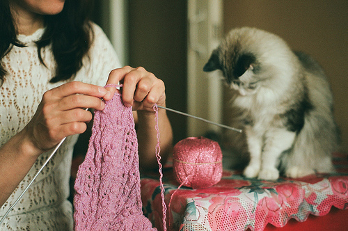 cats, cute, girl, indie, kitten, kitty, knitting, photography, pink, room
