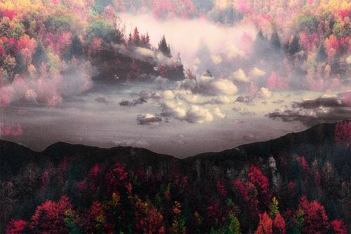 color, fall, fog, forest, landscape