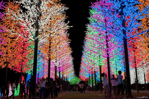 colors, colours, lights, nature, people