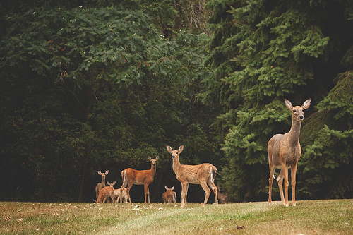 cute, deer, forest, photography