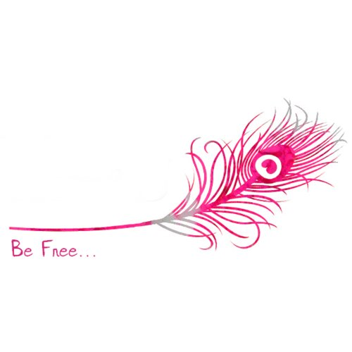 delicated, feather, feathers, fly, free