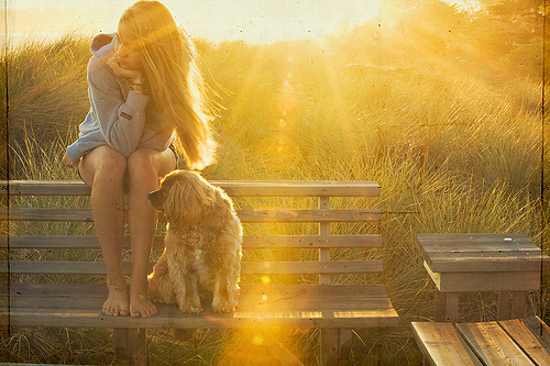 dog, girl, love, summer, sun
