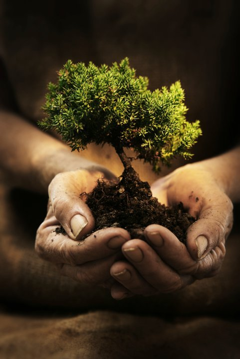 earth, hands, love, peace, tree