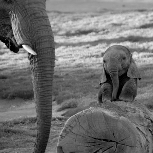 adorable, afirca, animals, baby, baby elephant