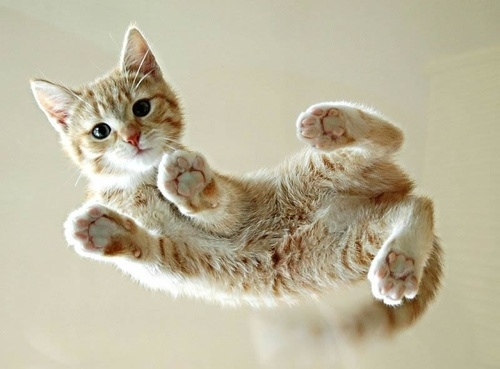 adorable, animals, cat, cats, cute, cute overload, flying, fofo, hovercat, kitten, kitty, paws, photography, yellow