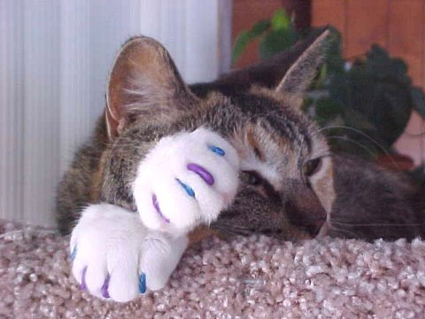 adorable, blue, brown, cat, cute, ears, eyes, fur, kitten, kitty, nails, purple, white