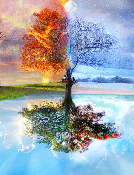 amazing, autumn, awesome, beautiful, spring, tree