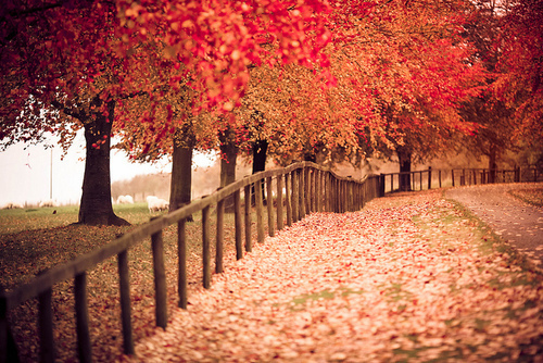 amazing, autumn, nature, photography, tree