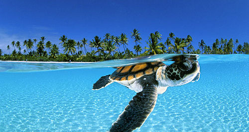 amazing, beautiful, isle, ocean, paradies, photography, turtle