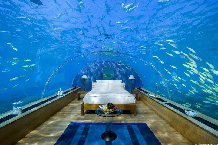 amazing, bed, blue, fish, ocean