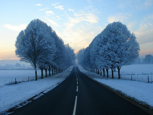amazing, best, free, freedom, gorgeous, home, like, love, nature, photografy, place, season, tree, trees, way, winter