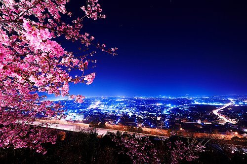 amazing, cherry tree, city, city lights, night