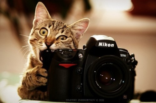 animal, camera, cat, cute, kitty, nikon, nom, tabby
