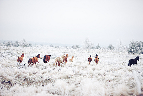 animal, forest, horse, horses, photography, sky, snow, white, winter