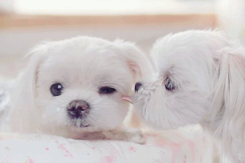 animal love, awww, dogs, ove, sweet