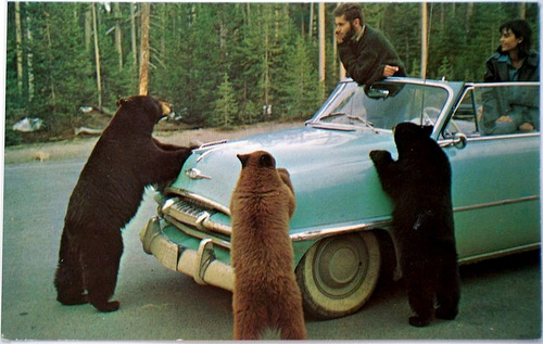 animals, art, bears, blog, car