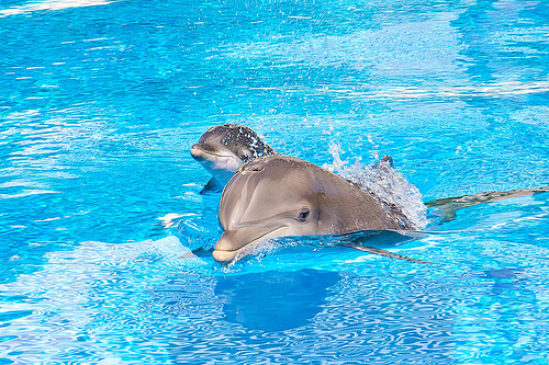 animals, blue, cute, dolphins, photography, water