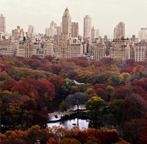 autumn, beautiful, bridge, building, central park, city, colour, fall, new york, nyc, river, tree, upper east side