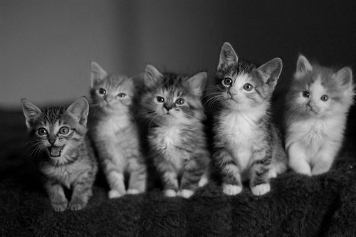 b & w, black and white, cat, cats, cute
