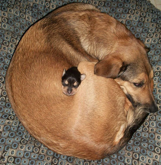 Baby Cute Dog And Puppy Image 306394 On Favim Com