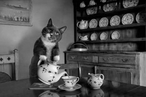 b&w, black & white, cat, cool, cup