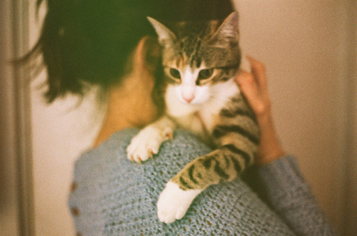 beautiful, cat, cute, girl, photo, photography, sweet, vintage