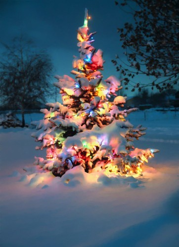 beautiful, christmas, christmas tree, lights, marinelle