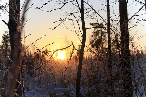 beautiful, christmas, cold, color, colorful, colors, december, inspiration, inspire, inspiring, landscape, nature, photography, pretty, snow, sun, sunlight, sunset, tree, trees, winter