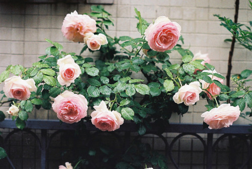 beautiful, flower, flowers, gorgeous, green, hipster, plant, indie, pink, photography, pretty, perfect, red, vintage, nature
