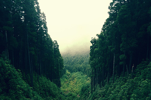 beautiful, fog, forest, green, grey