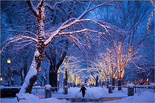 Beautiful, Lights, Trees, White, Winter
