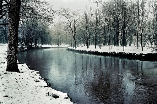 beauty, forest, river, snow, tree, water, winter