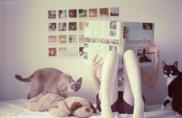 bedroom, book, cats, gabriela minks, girl