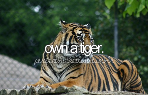 before i die, perfectbucketlist, tiger