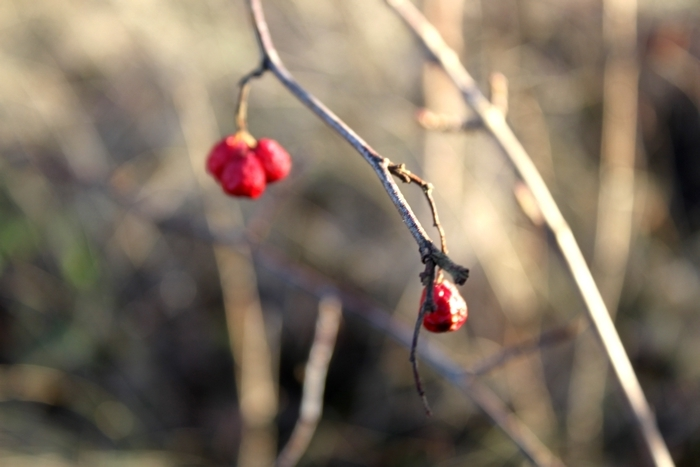 berries, branch, focus, light, love