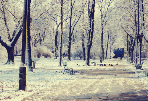 birds, nature, park, snow, white, winter