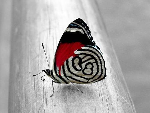 Black And White Photography Black And White Butterfly