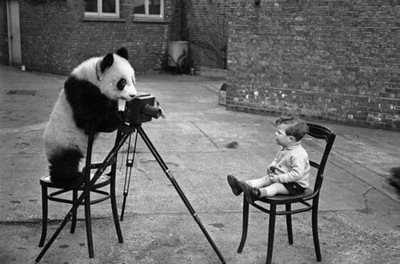 black and white, chair, kid, panda, photography