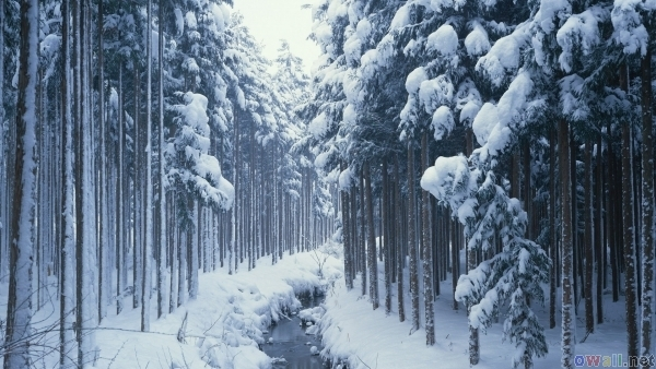 blue, forest, river, snow, tree