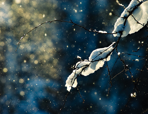 bokeh, branch, nature, snow