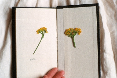 book, cute, flower, memory, nature