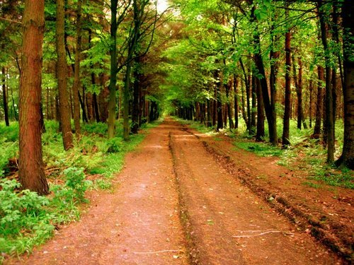brown, dirt, green, nature, path, pathway, trees