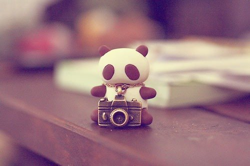 camera, cute, mini, pand, panda