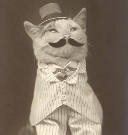 cap, cat, moustache, old, white blouse