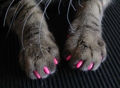 cat, claws, nail polihs, nails, pink, polish